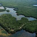 Kayak Weedon Island's picture
