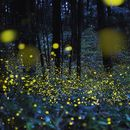 Contac With Fireflies's picture