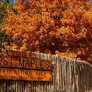 Camping at Lost Maples's picture