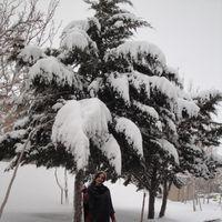 hani siavashi's Photo