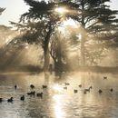 Golden Gate Park Hangout's picture