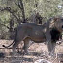 Kruger National Park in South Africa - Revisited's picture