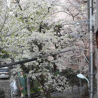 Haruko Shimada's Photo