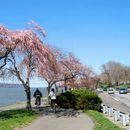 Immagine di Bike Ride & Cherry Blossoms - New York Adventures