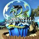 Who wants to go to SeaWorld?'s picture