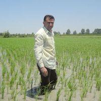 mohammad hossain fallah's Photo