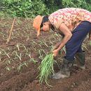 Learn Organic Farming's picture