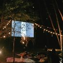 free movie in the natural park @ night's picture