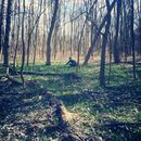*Bärlauch Harvest Fun - Vienna Woods :) *'s picture