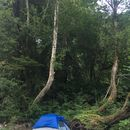Camping's picture