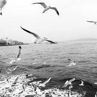 Gizem Taş's Photo