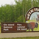 Elk Island Day Trip 's picture