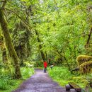Trip to Olympic National Park ! 's picture