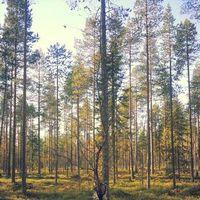 Tuomas Tokola's Photo