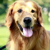Pets Health's Photo